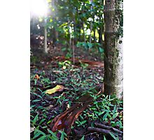 Leaf litter at City Botanic Gardens Photographic Print