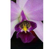 Pinky Purple  Photographic Print