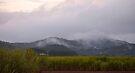 Condong morning mist by Odille Esmonde-Morgan