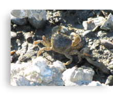 Shoreside Crabby Worker on the Sound Canvas Print