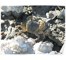 Shoreside Crabby Worker on the Sound Poster