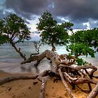 Fallen Tree at Sunset in Hawaii by thatche2