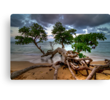 Fallen Tree at Sunset in Hawaii Canvas Print