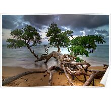 Fallen Tree at Sunset in Hawaii Poster