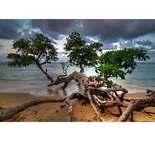 Fallen Tree at Sunset in Hawaii Photographic Print