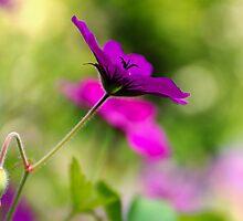 Purple Passion by JEZ22