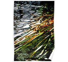Reeds and Water 2 Poster