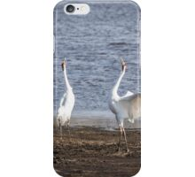Territorial Call Of The Whooping Cranes 2015-1 iPhone Case/Skin