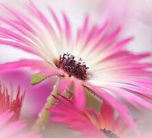 Summer breeze... by Bob Daalder