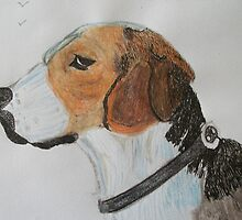 Beagle portrait by GEORGE SANDERSON