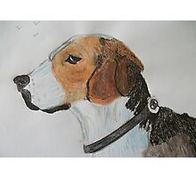 Beagle portrait Photographic Print