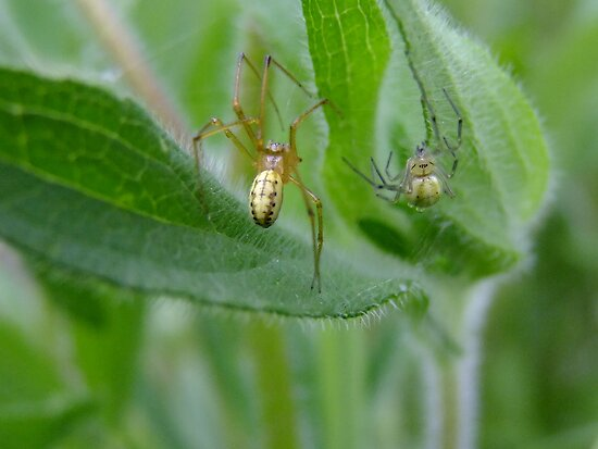 Two Spiders Meet In The Rain... by Tracy Faught