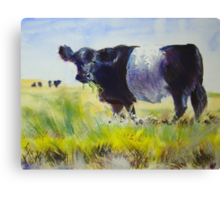 Belted Galloway Cow Painting Canvas Print