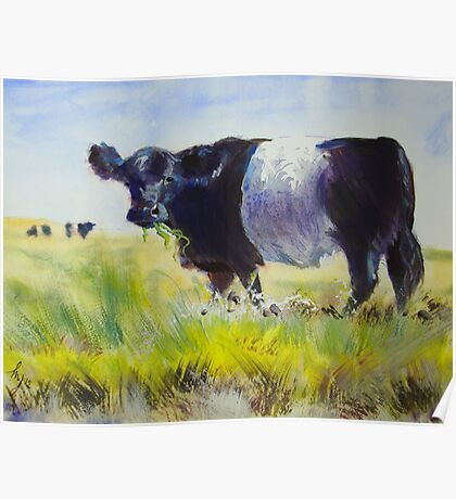 Belted Galloway Cow Painting Poster