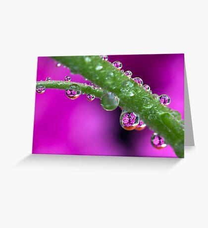 Chrysanthemum flower drops. Greeting Card