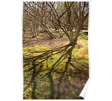 Sunlight on a coppice wood Poster