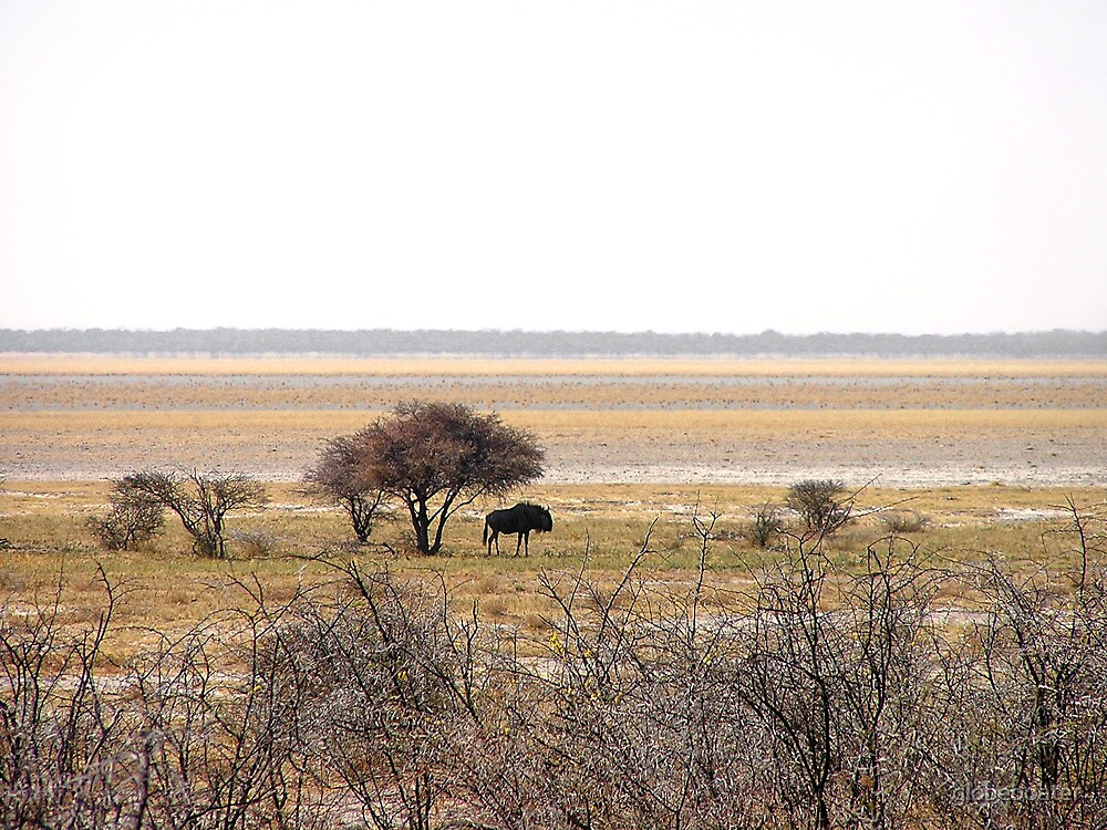 Wildebeest in Namibia by globeboater