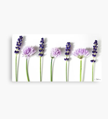 Lavender and Chives Canvas Print