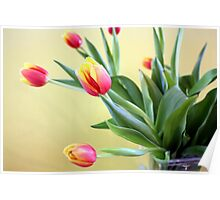 Tulips in Glass Vase Poster