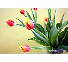 Tulips in Glass Vase Photographic Print