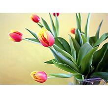 Tulips in Glass Vase Photographic Print