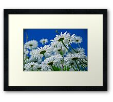 Under the Daisies Framed Print