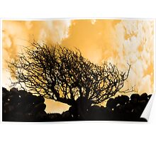 windswept tree and stone wall in storm Poster