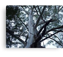 Trees can be Scary Canvas Print