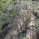 Rock's Tree - Arbol De Roca by Bernhard Matejka