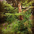 New England Idyll I by RC deWinter