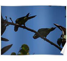 Cuckoo Cuckoo - We Are Here... - Cuco Cuco - Estamos Aqui... Poster