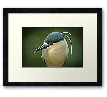 Black Crown Night Heron On The Hunt Framed Print