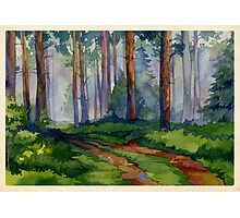 Evergreen forest Photographic Print