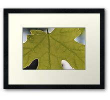 Innerworkings of a Maple Leaf Framed Print