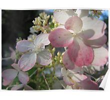 Pale Pink Poster
