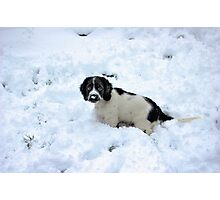 Playing in the snow Photographic Print