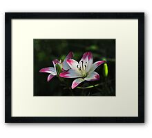 Pink Tipped Lillies In The Shadows Framed Print