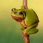 Go go Frog by Istvan Natart