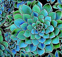 Spring Gems ~ Emerald Succulents by Diane McWhirter