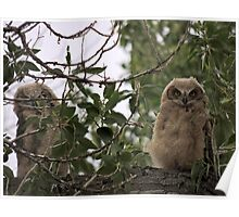 Owls in the Family Poster