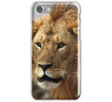 Cat: Large Male Lion Looking Intently as He Comes Out of the Bush, Maasai Mara, Kenya  iPhone Case/Skin