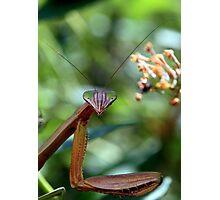 "Praying Mantis - ""Say cheese!"" Photographic Print"