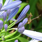 Paper Wasp on Lily of the Nile by Ron Russell