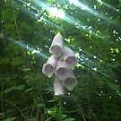 Sunlit Fairy Bells by S0rcy