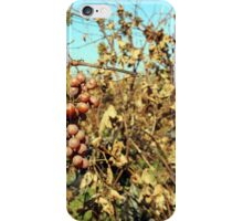 A white grape branch in the vineyard in the fall iPhone Case/Skin