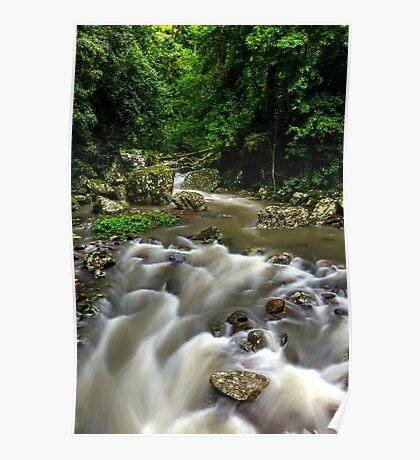 Cave Creek - Springbrook National Park Poster