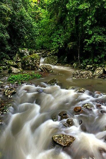 Cave Creek - Springbrook National Park by Mark  Lucey