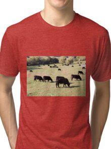 Black Angus beef cattle  Tri-blend T-Shirt