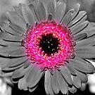 Flower power! by LittleLivs