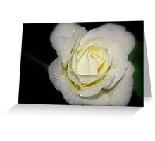 drops on a white rose at night Greeting Card
